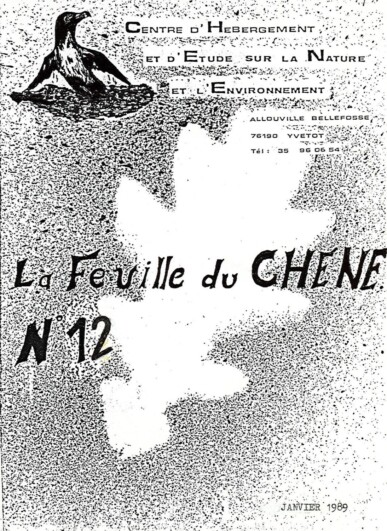 Feuille-du-CHENE-N°12