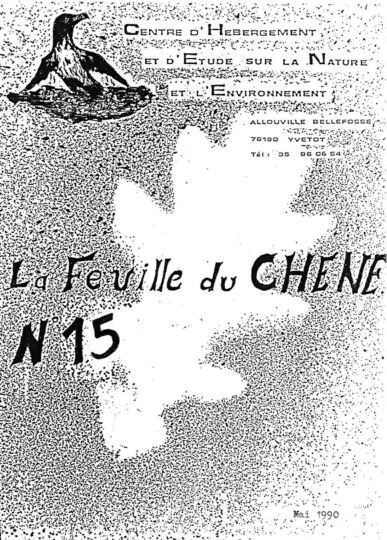 Feuille-du-CHENE-N°15