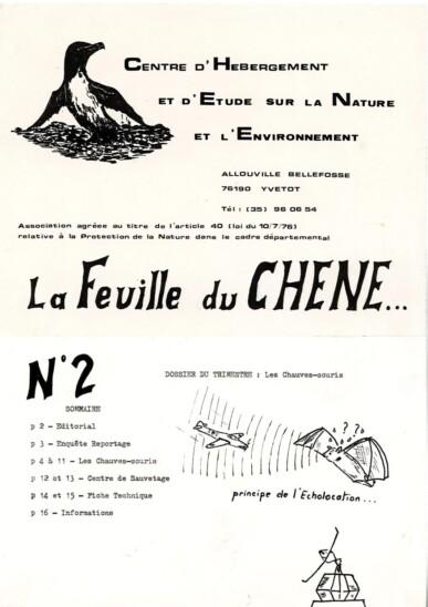 Feuille-du-CHENE-N°2