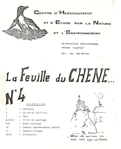 Feuille-du-CHENE-N°4