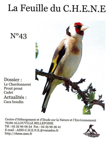 Feuille-du-CHENE-N°43
