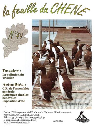 Feuille-du-CHENE-N°49