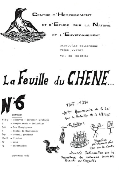 Feuille-du-CHENE-N°6