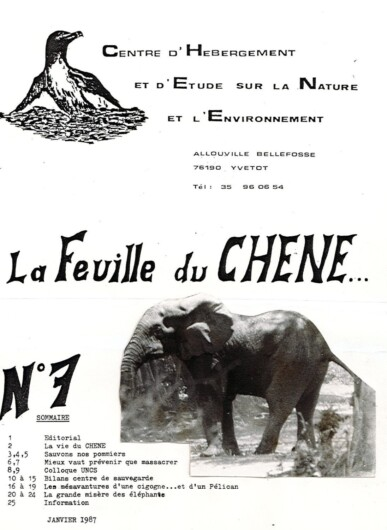 Feuille-du-CHENE-N°7