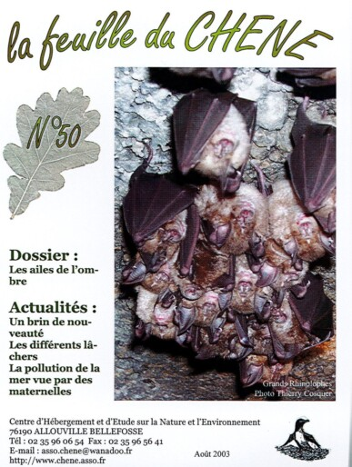 Feuille-du-CHENE-n°50
