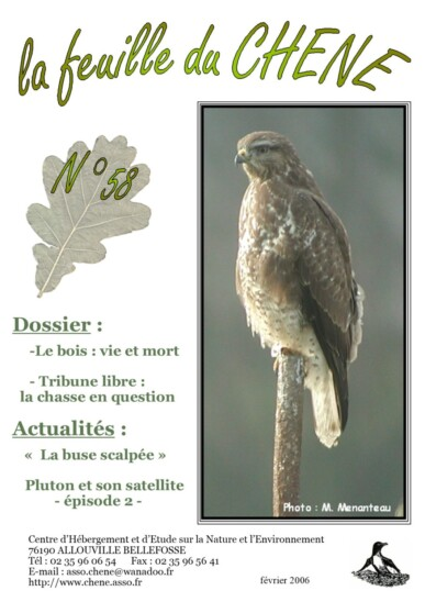Feuille-du-CHENE-n°58