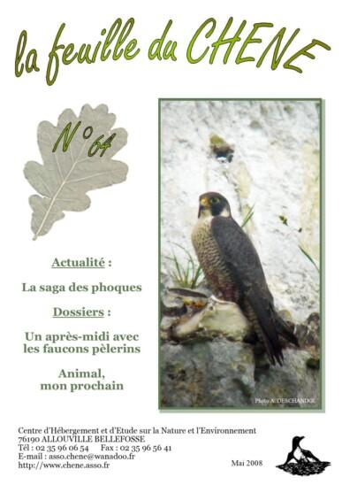 Feuille-du-CHENE-n°64
