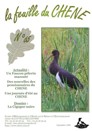 Feuille-du-CHENE-n°65
