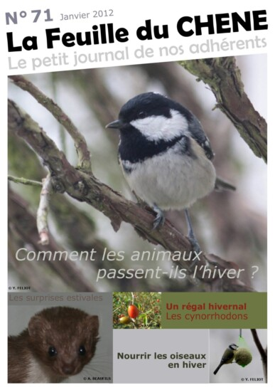 Feuille-du-CHENE-n°71