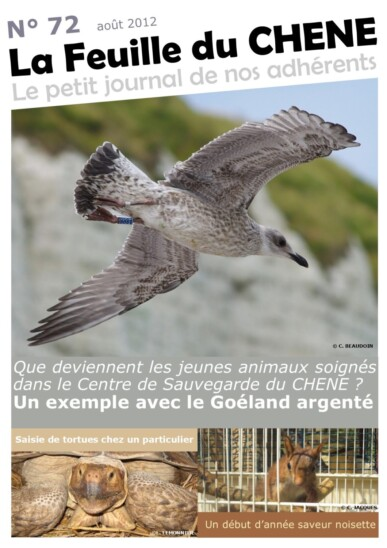 Feuille-du-CHENE-n°72