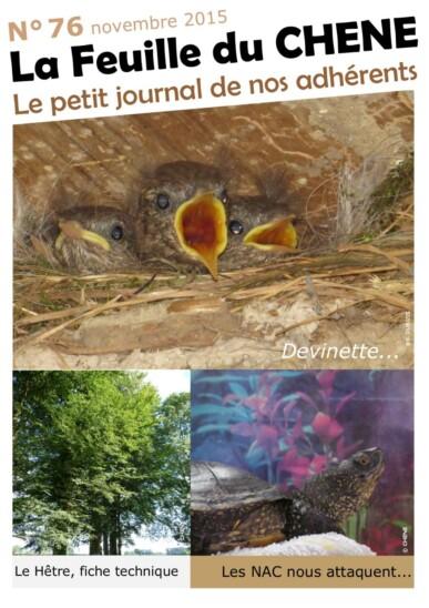 Feuille-du-CHENE-n°76