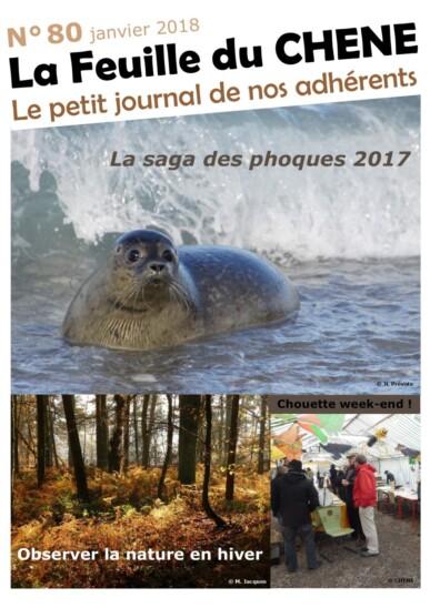 Feuille-du-CHENE-n°80
