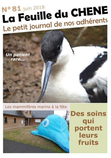 Feuille-du-CHENE-n°81